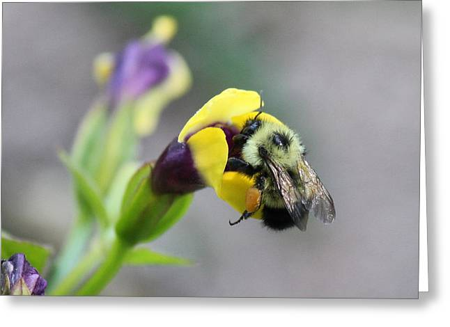 Greeting Card featuring the photograph Bumble Bee Making A Wish by Penny Meyers