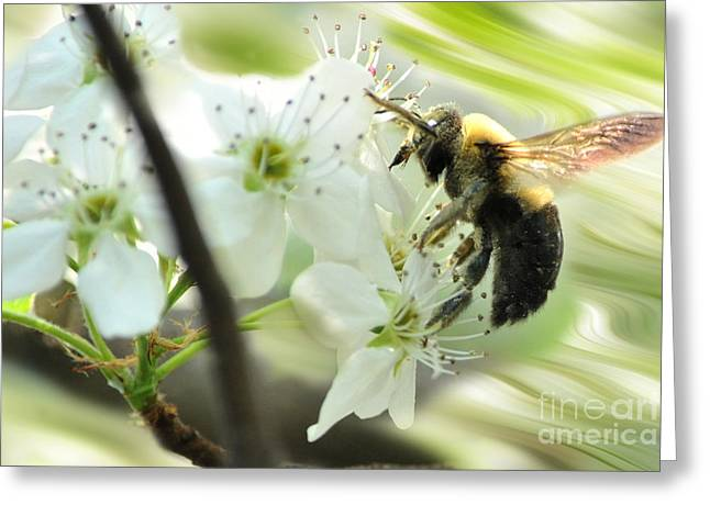 Bumble Bee On Flower Greeting Card by Dan Friend