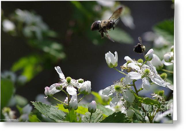 Bumble Bees In Flilght Greeting Card by Tannis  Baldwin