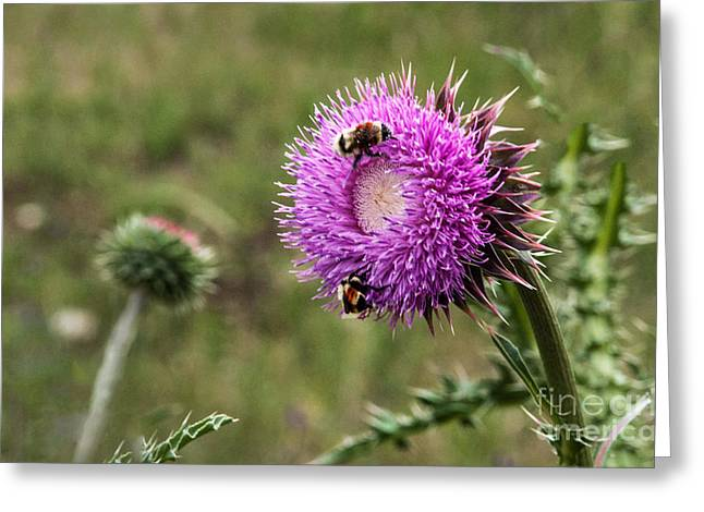 Greeting Card featuring the photograph Bumble Bees by Mae Wertz