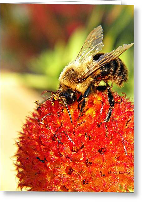 Bumblebee And Seed Globe Greeting Card by Chris Berry