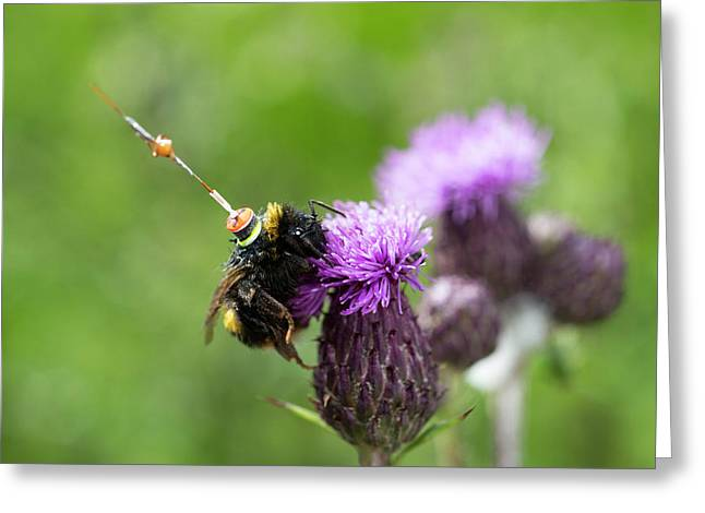 Bumblebee Radar Tagging Greeting Card by Louise Murray