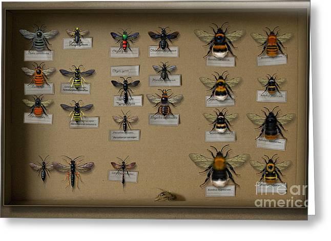 Bumblebees - Wild Bees - Wesps - Yellow Jackets - Ichneumon Flies - Apiformes Vespulas Hymenopteras  Greeting Card by Urft Valley Art