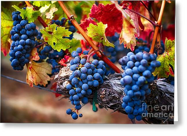 Bunch Of Blue Grapes On The Vine Greeting Card by George Oze