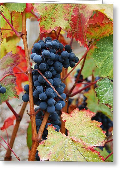 Bunch Of Grapes Greeting Card by Jani Freimann