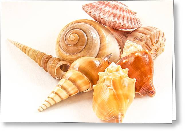 Bunch Of Shells Greeting Card by Jean Noren