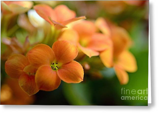 Bunch Of Small Orange Flowers Greeting Card by Sami Sarkis