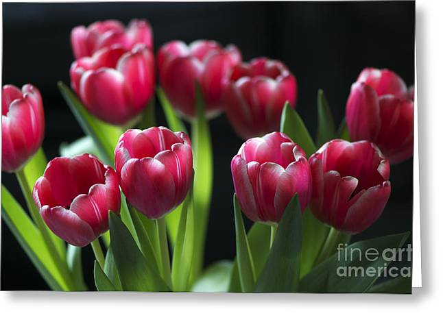 Bunch Of Tulips Greeting Card by Sharon Talson