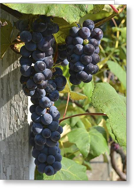 Bunches Of Grapes Greeting Card