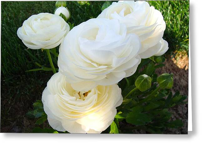 Greeting Card featuring the photograph Bundle Of White by Tamara Bettencourt