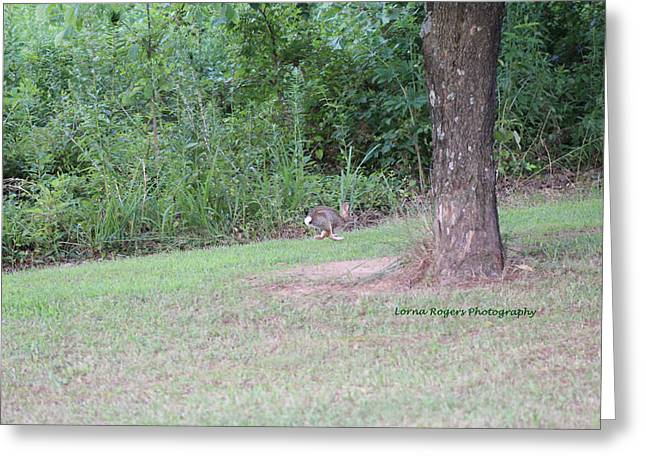Greeting Card featuring the photograph Bunny Hop by Lorna Rogers Photography