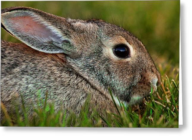 Bunny Profile Greeting Card