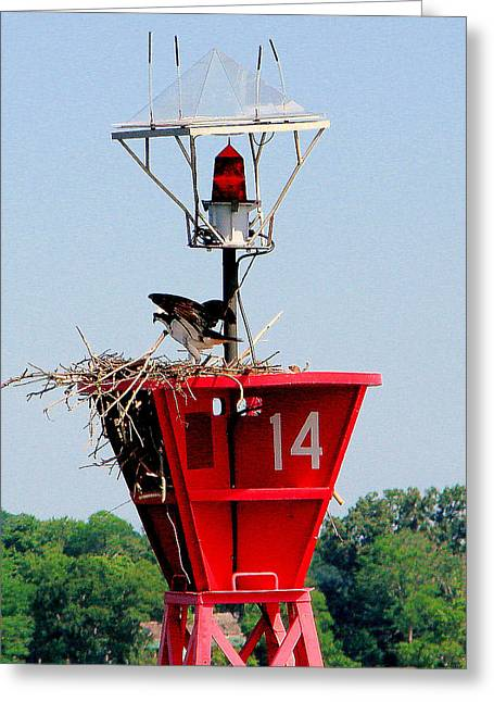 Buoy On Severn River Near Annapolis Maryland Greeting Card