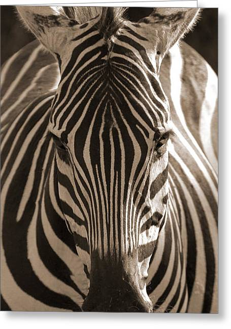 Greeting Card featuring the photograph Burchell's Zebra by Chris Scroggins