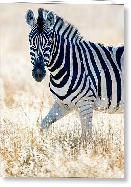 Burchells Zebra Equus Quagga Greeting Card by Panoramic Images