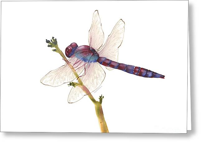 Burgundy Dragonfly Greeting Card by Amy Kirkpatrick