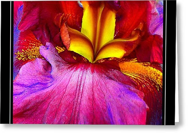 Burgundy Iris Enhanced Greeting Card by Randy Rosenberger