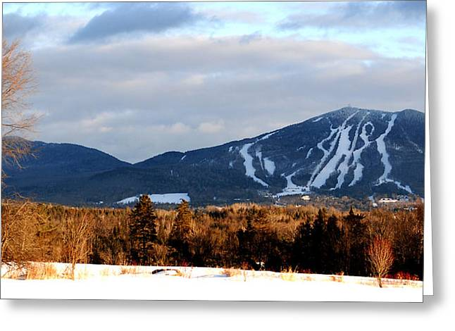 Burke At Dusk Greeting Card by Tammy Collins