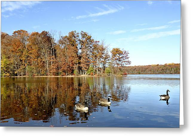 Burke Lake Park In Fairfax Virginia Greeting Card by Brendan Reals