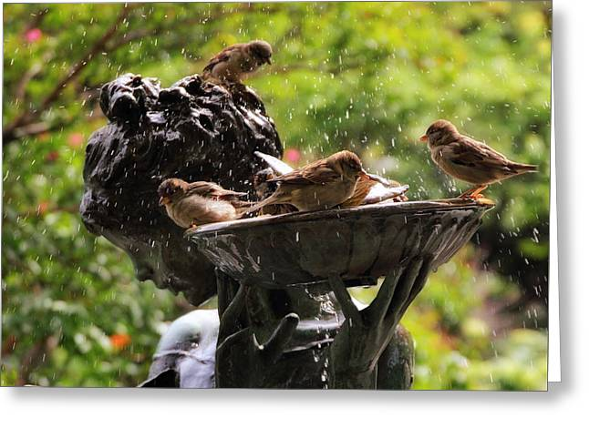 Burnett Bird Bath Greeting Card by Jessica Jenney