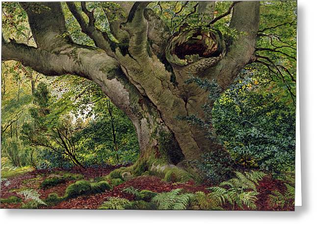 Burnham Beeches Greeting Card by James Matthews