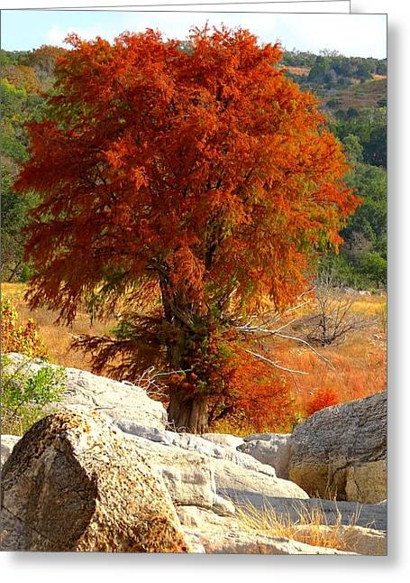 Greeting Card featuring the photograph Burning Cypress by David  Norman