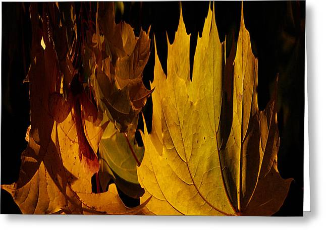 Burning Fall Greeting Card
