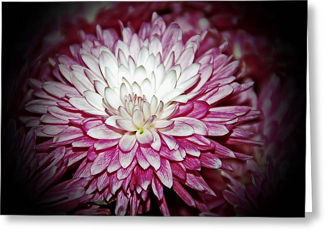 Burning Pink Greeting Card by Aimee L Maher Photography and Art Visit ALMGallerydotcom