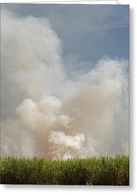 Burning Sugar Cane Greeting Card