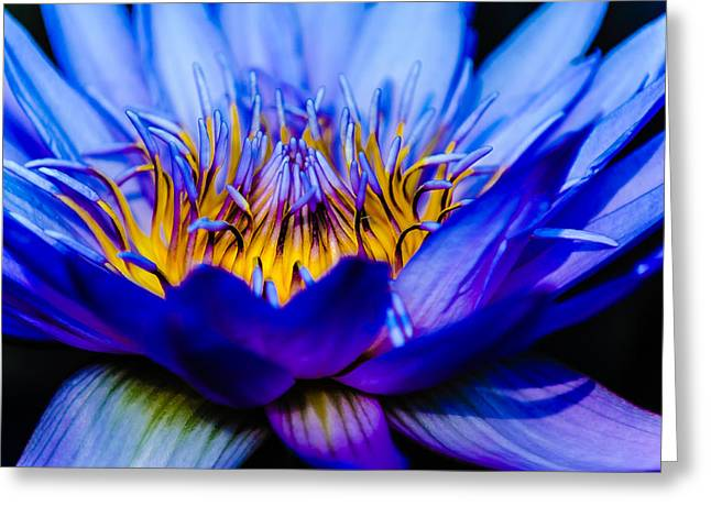 Greeting Card featuring the photograph Burning Water Lily by Louis Dallara