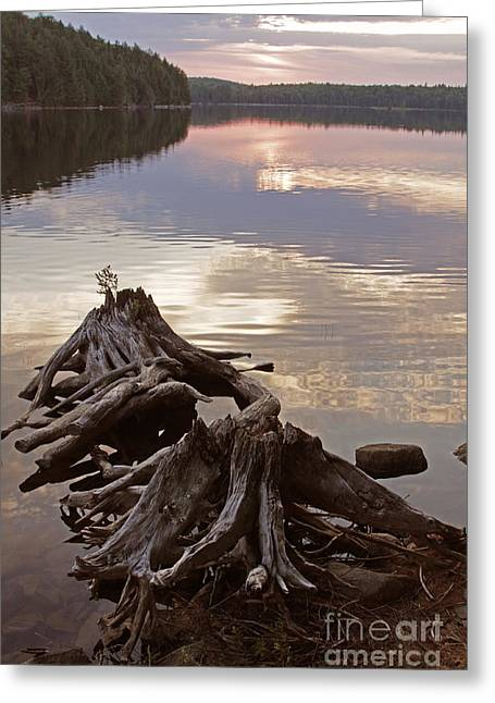 Burnt Island Lake Sunset Greeting Card by Chris Hill