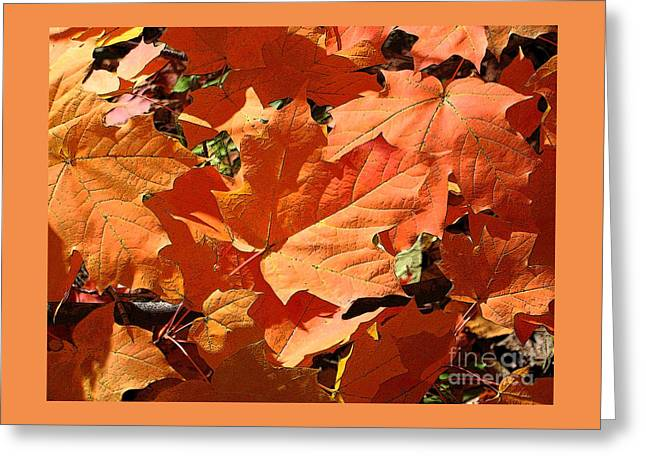Burnt Orange Greeting Card by Ann Horn