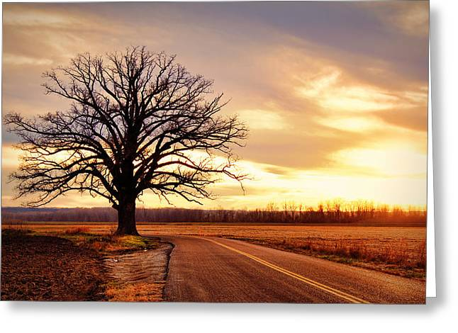 Burr Oak Silhouette Greeting Card by Cricket Hackmann