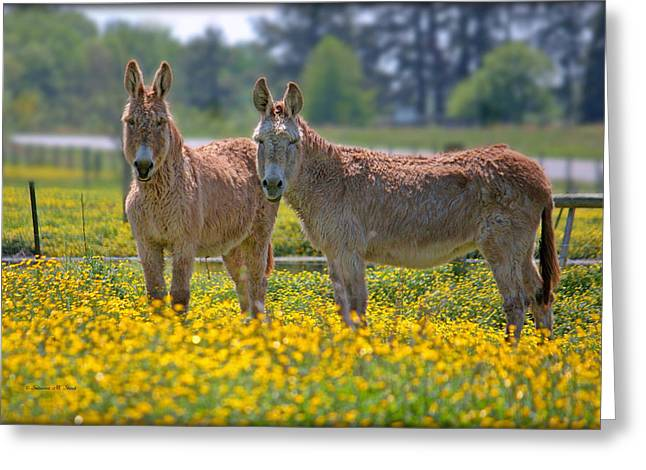 Burros In The Buttercups Greeting Card