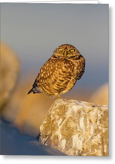 Burrowing Owl (athene Cunicularia Greeting Card by Larry Ditto