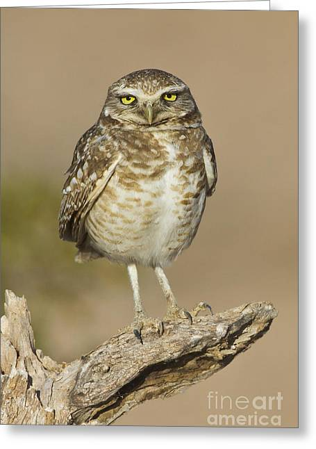 Greeting Card featuring the photograph Burrowing Owl by Bryan Keil