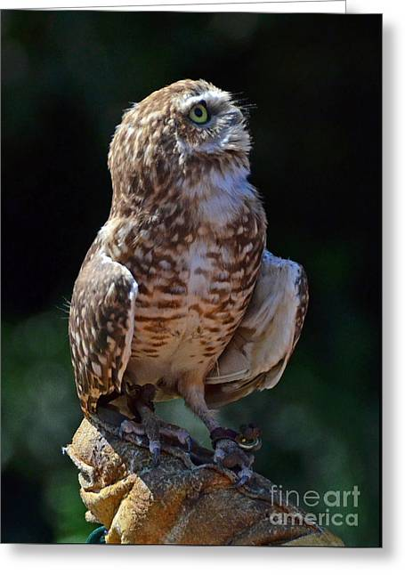 Greeting Card featuring the photograph Burrowing Owl by Debby Pueschel