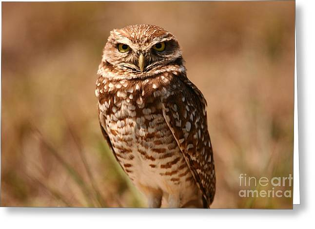 Burrowing Owl Impressions Greeting Card