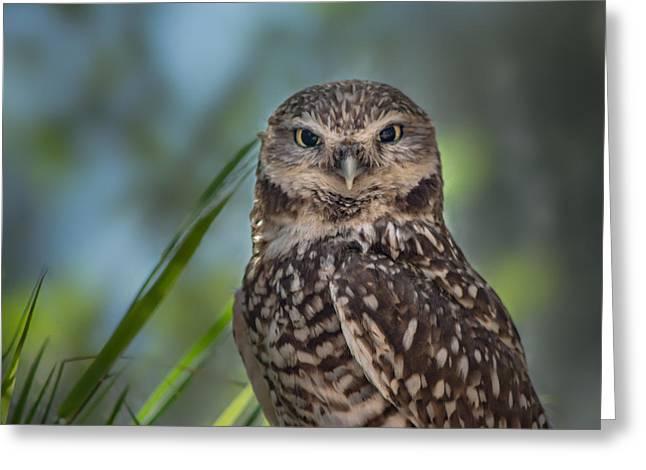 Burrowing Owl Greeting Card by Linda Villers