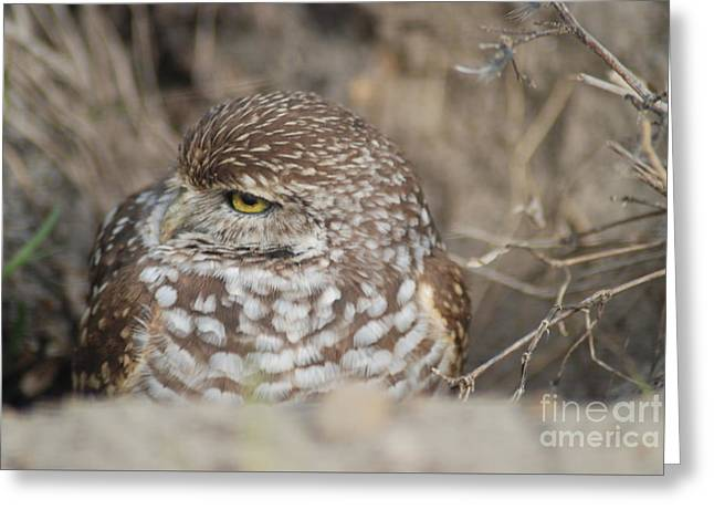 Greeting Card featuring the photograph Burrowing Owl by Oksana Semenchenko