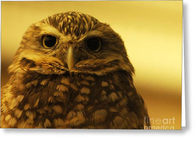 Greeting Card featuring the photograph Burrowing Owl by Olivia Hardwicke
