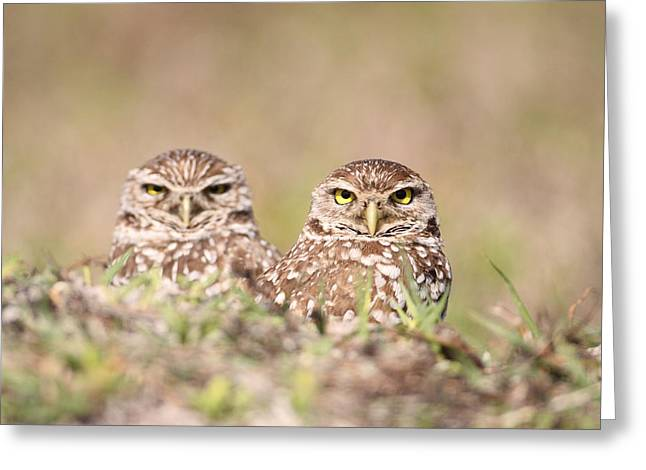Burrowing Owl Pair Greeting Card