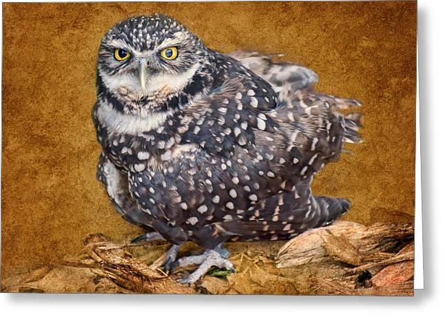 Burrowing Owl Portrait Greeting Card by Nikolyn McDonald