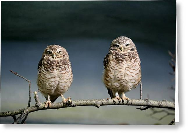 Greeting Card featuring the photograph Burrowing Owls by Larry Trupp