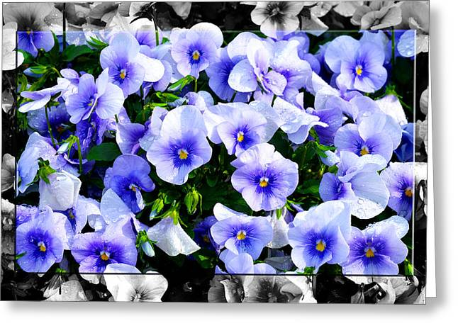 Burst Of Blue - B Greeting Card by Robert Clayton