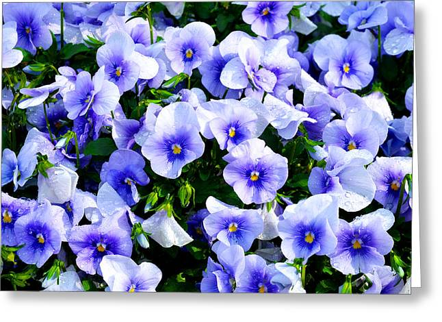 Burst Of Blue Greeting Card by Robert Clayton