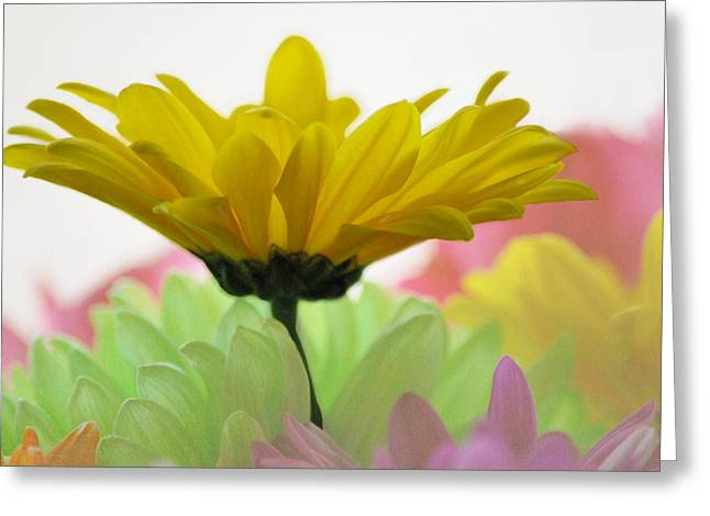 Burst Of Color Greeting Card