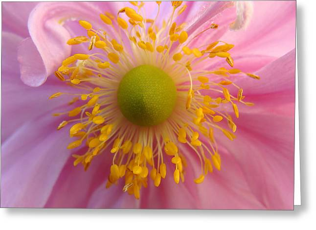 Windflower Greeting Card by Cheryl Hoyle