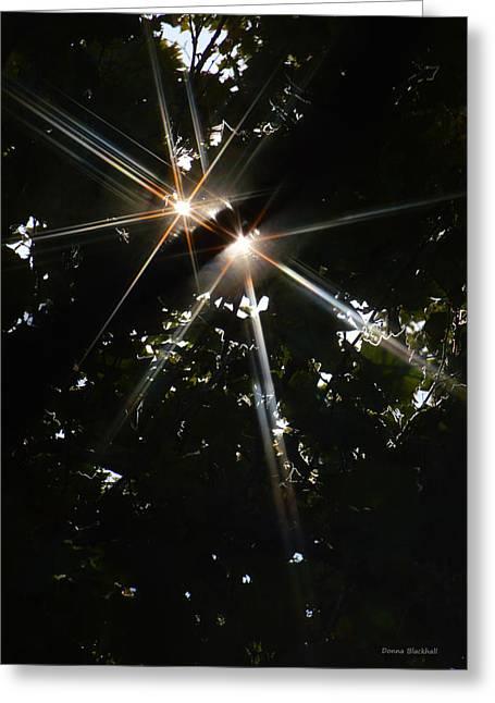 Bursting Through Trees Greeting Card by Donna Blackhall