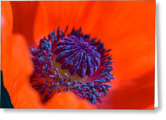 Greeting Card featuring the photograph Bursting With Colour by Garvin Hunter